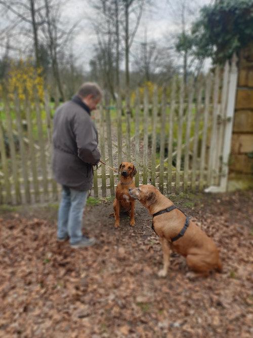Victor Stein mit aufmerksamen Schlosshunden