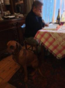 Victor Stein - Foto lesend mit Hund